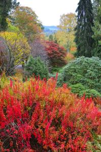 Dawyck Autumn Colours